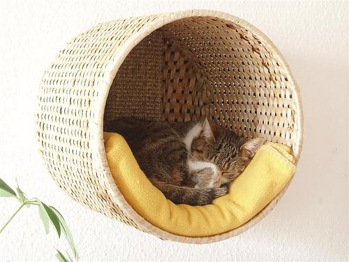 Chill out Lounge für Katzen